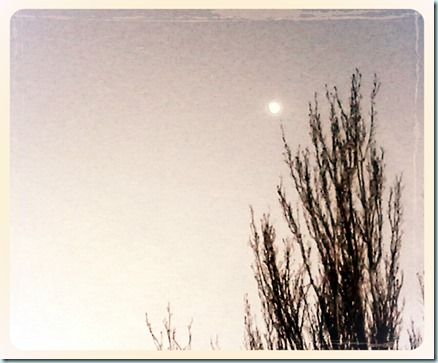IMG_20121222_095408